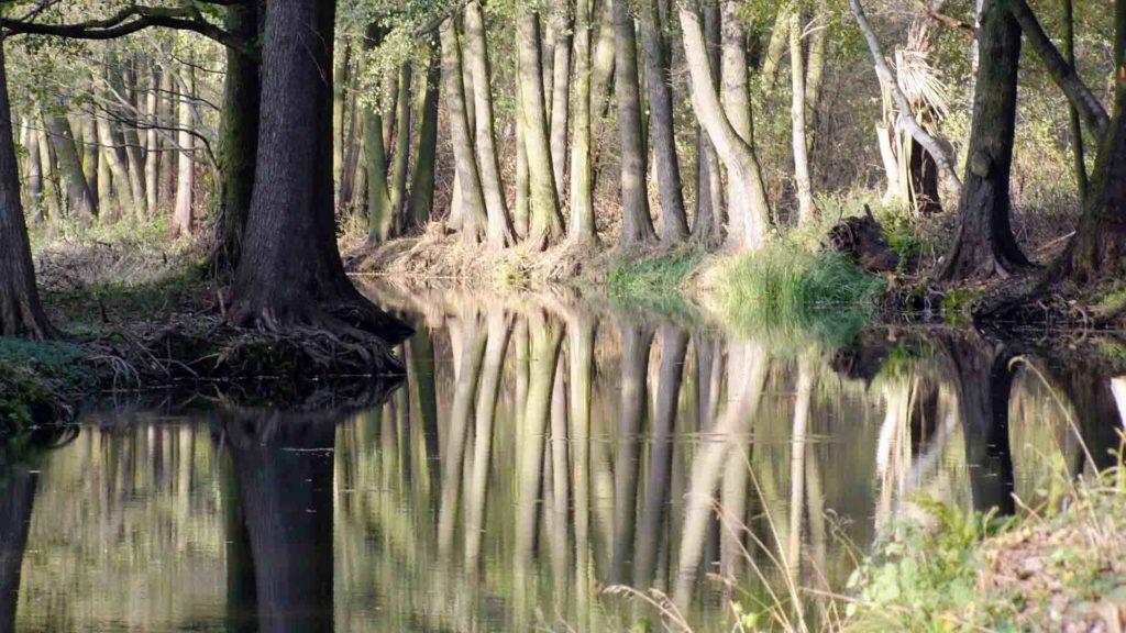 Uferimpression vom Hochwald