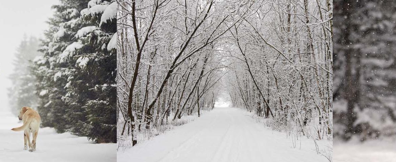 Winterspaziergang, Winterlandschaft, Hirsch im Wald