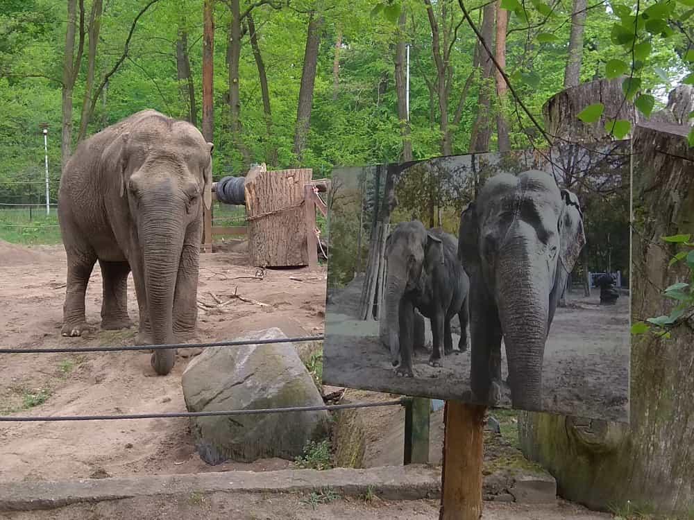 Spreewald-Tierpark-Cottbus_2